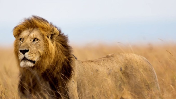 tt-editors-picks--2273--man-pays-55-000-to-shoot-kill-cecil-the-lion--large.thumb